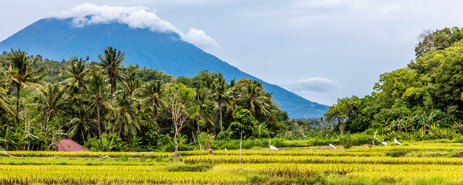 Bali Mount Agung with rice field