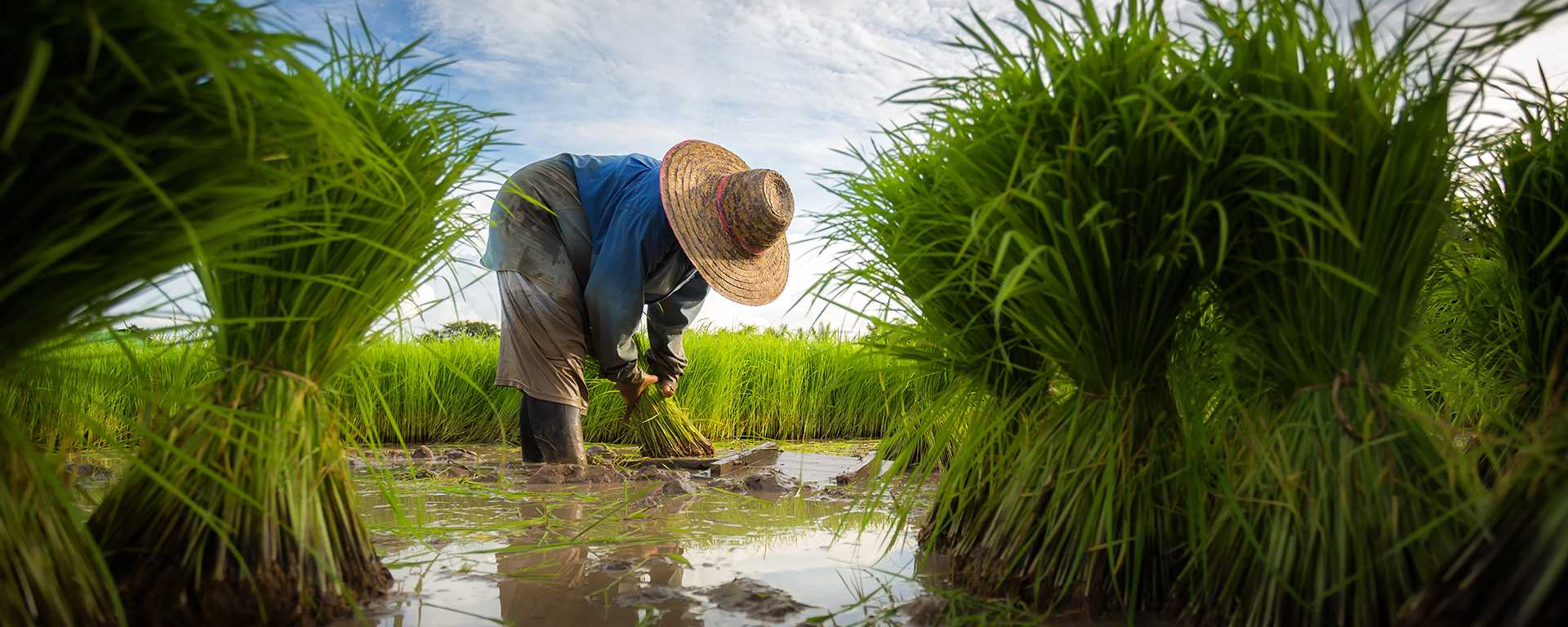 Rice-Farmer-1920×768-660kb